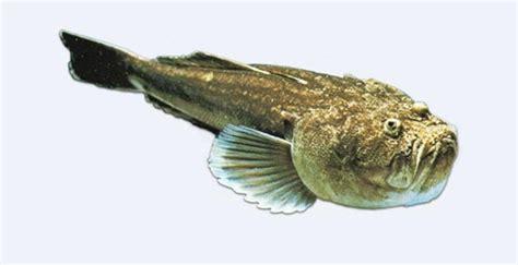 pesci cucina pesce 232 page 2