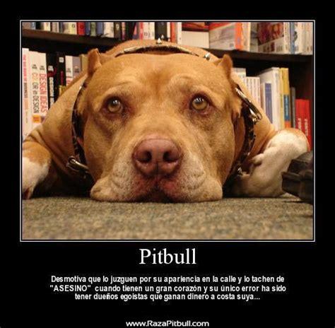 imagenes  frases sobre los perros pitbull