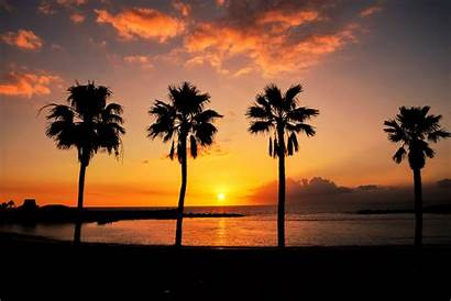 Palm Canaria Gran Vacation Trees Spain Nature