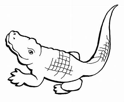Crocodile Coloring Pages Animals Animal