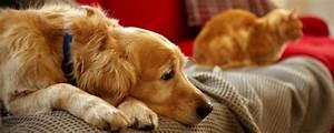 Vermieter Verbietet Hund : jedes haustier muss einzeln vom vermieter genehmigt werden ~ Lizthompson.info Haus und Dekorationen