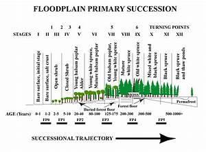 Ecological Succession  Ecological Succession
