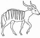 Bongo Coloring Pages Antelope African Bongos Printable Drawing Forest Supercoloring Template Categories sketch template