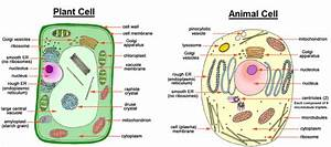 The Cell And Cell Theory   Important For Ugc Net  Upsc Cse
