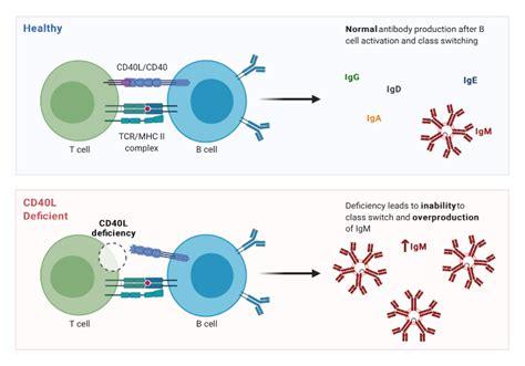 CD40 Ligand Deficiency
