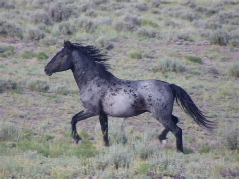 colors horse roan horses unusual unique most stunning these