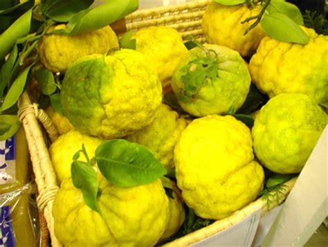 synonyme de cuisine yuzu bio citron fruit yuzu japonais antioxydant naturel