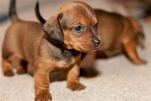 10 Great Dog Breeds for Children - MyGunnedah