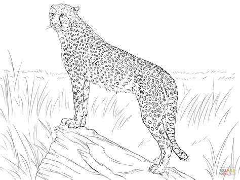 Cheetah Kleurplaat by Coloring Pages Cheetah Coloring Home