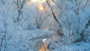 Winter Frost   Winter Frost Branches Photography ...