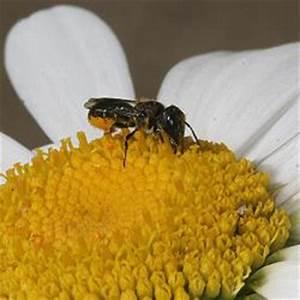 Wann Stellt Man Weihnachtsbaum Auf : re wann stellt man nistm glichkeiten auf das wildbienenforum ~ Buech-reservation.com Haus und Dekorationen