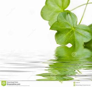 Green Leaves Reflecting In Water Royalty Free Stock Images ...