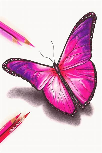 Pencil Colored Butterfly Pencils Coloured Drawings Drawing