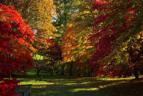 garden autumn autumn colour at bodnant gardens north wales everything digital