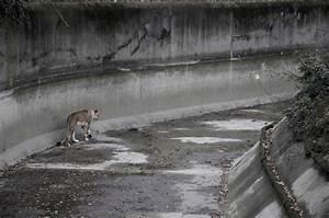 11 Heartbreaking Photos Exposing Zoos As Animal Prisons ...