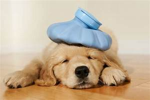 can dogs colds