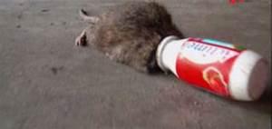 Comment Tuer Un Rat : tuer un rat avec du coca taupier sur la france ~ Mglfilm.com Idées de Décoration