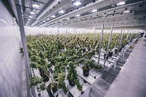 Photos of Canopy Growth's massive marijuana grow site ...