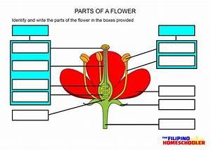 Gumamela Flower And Label Its Parts