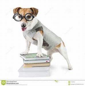 Avid smart reader stock photo image 51743125 for Avid dog