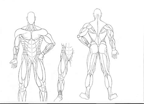 Human Anatomy Study Sheets