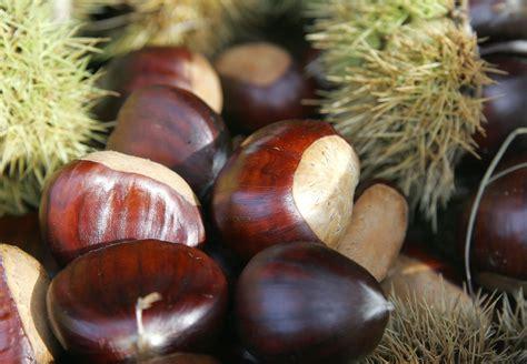 chataigne cuisine symbiosis diversity resilience abundance chestnuts as