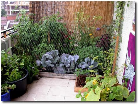 Balkon Garten by Balcony Garden Ideas Growingarden
