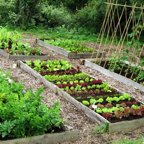 starting a veggie patch small year round veg patch rocket gardens