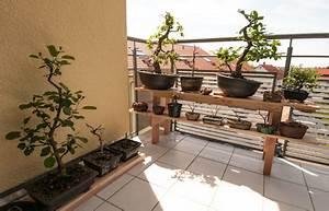 Nischenregal Selber Bauen : ein bonsairegal aus holz selber bauen ~ Sanjose-hotels-ca.com Haus und Dekorationen