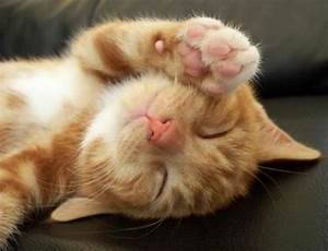 Pictures Of Cute Kittens Sleeping - Pictures Of Animals 2016