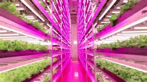 indoor farming led lights how led is lighting the way toward indoor farming ge