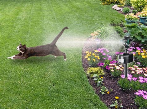 keep dogs out of garden keep cats and dogs out of your garden with motion detector
