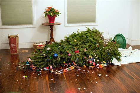 pines and needles blog don t blame it on the christmas tree