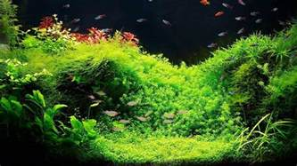 designer aquarien setting up a fish tank with live plants aquarium care