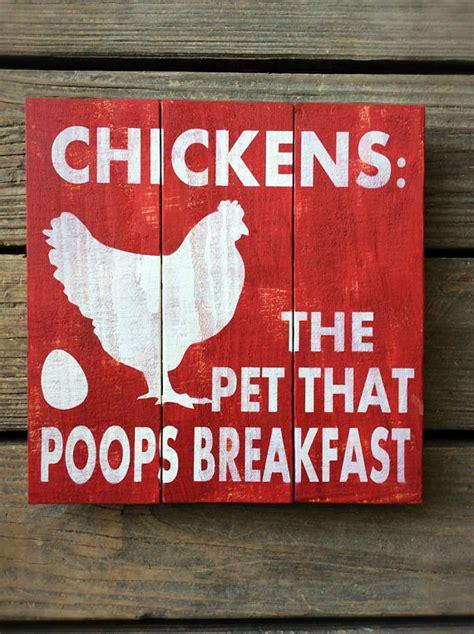 chickens  pet  poops breakfast chicken chicken coop