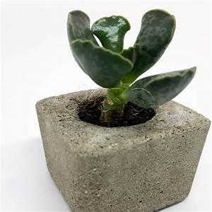 Pflanzen Kübel Beton : beton und pflanzen dinge aus beton ~ Sanjose-hotels-ca.com Haus und Dekorationen