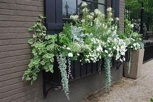 composition jardiniere ete de fleurs blanches et plantes With comment amenager sa piscine 13 decoration jardiniere balcon