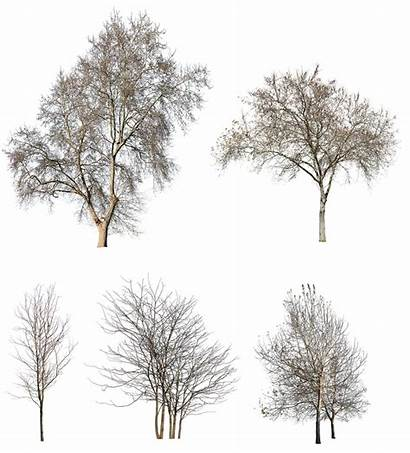 Winter Trees Pack Cutout Title Collage Guardado