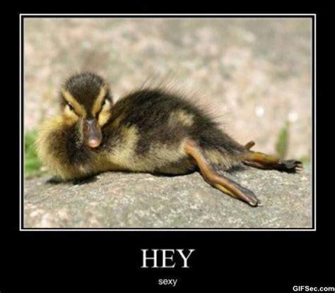 Funny Adult Meme - funny adult memes www imgkid com the image kid has it