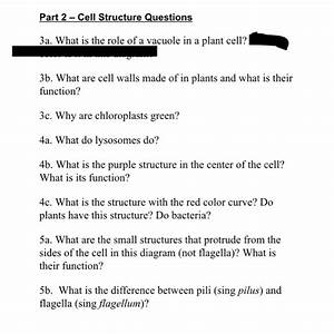 Plant Cell Wall Diagram