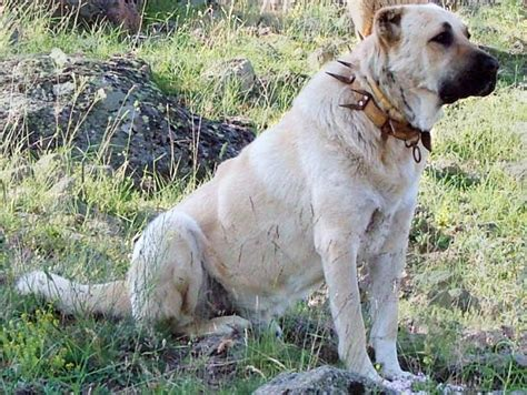 top  dogs   strongest bite pet comments