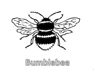 bee coloring pages educational activity sheets