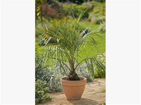 Die Schönsten Palmenarten Für Den Wintergarten
