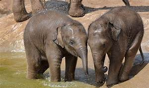 Chester, Zoo, Animal, Rights, Campaigners, Fury, After, Five, Elephants, Dead, In, Six, Years