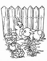 Coloring Garden Pages Gardening Vegetable Printable Rabbits Sheets Bunnies Animal Flower Template Bible Check Getcolorings Hmcoloringpages Fun Child Date Secret sketch template