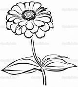 Zinnia Flower Coloring Pages Drawing Sketch Printable Getcolorings Getdrawings sketch template