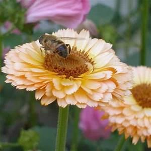 Pretty And Useful : 5 useful and pretty plants ~ Watch28wear.com Haus und Dekorationen