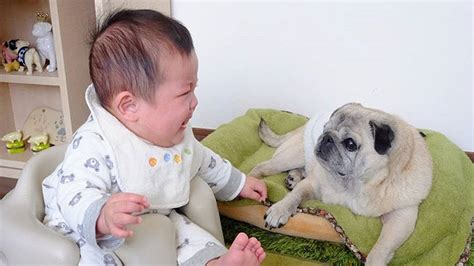 cutest funniest babies playing  cute puppies dogs