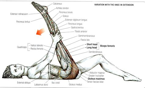 Gluteus Maximus Exercise, Strengthens And
