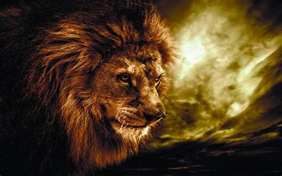 Lion Fire Wallpapers Animal Amazing Wallpapertag